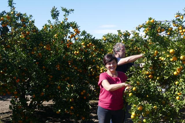 Izpolnjena želja z obiranjem mandarin.